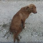 Бездомно куче в Пловдив