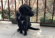 Тайра има нужда от Вашата помощ в Пловдив