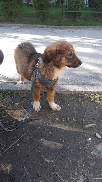 Кученце със счупено краченце търси дом в Пловдив