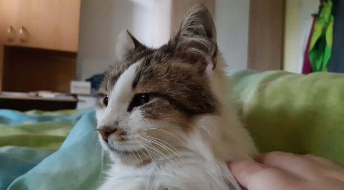 Котката Били има нужда от нашата помощ