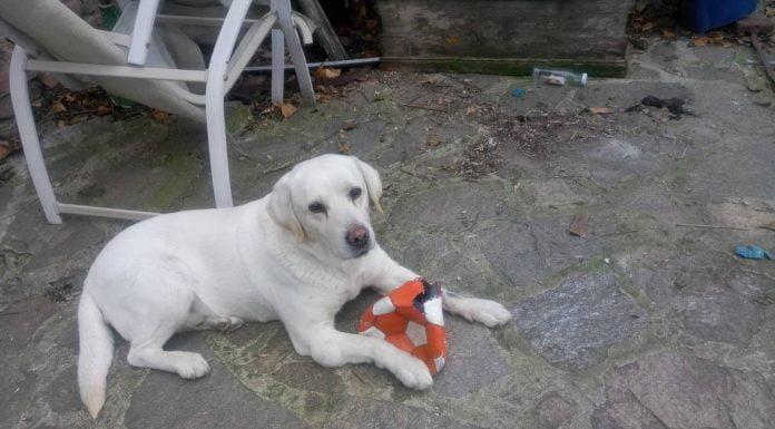 Изгубеното в Пловдив кученце се казва Марли