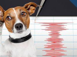 Предусещат ли животните земетресенията?