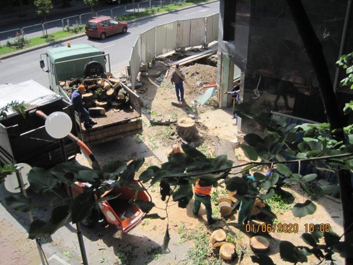 Общината реже дървета срещу заплащане в Пловдив