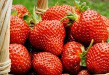 Защо и кой не трябва да яде ягоди?