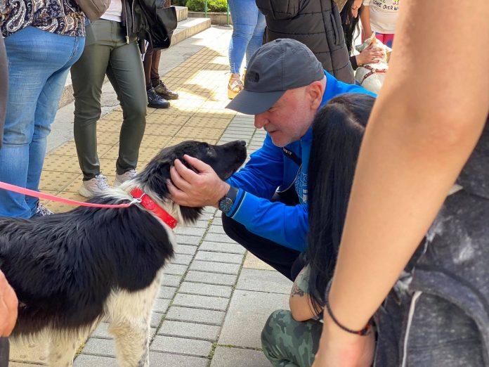 Да бъдем отговорни и да спасим бездомните животни